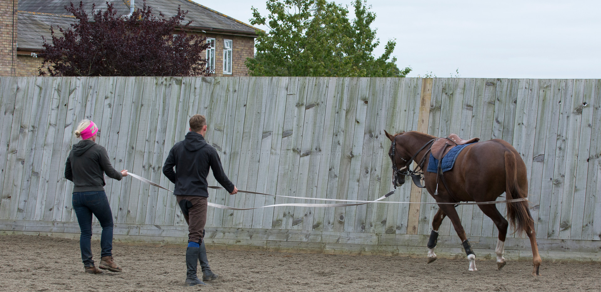 DSC_0317 lunging youngsters T trouble!.j
