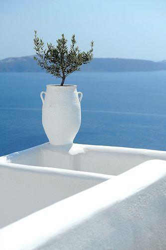 Olive Hearts destination weddings