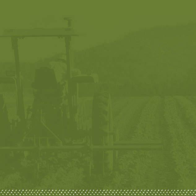 FWP-Website-Homepage-GreenBG.jpg