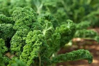 Chou Kale vert ou rouge