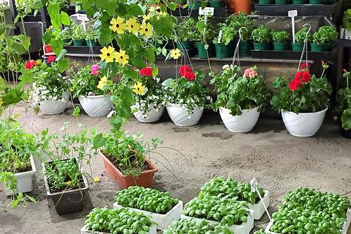 """Jardinières 12"""" variétés de 3 ou 4 couleurs"""