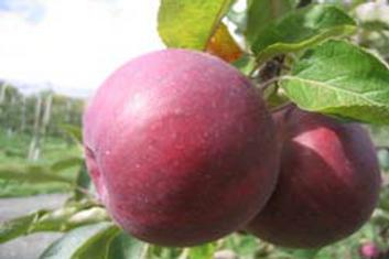 Pomme Royal Court