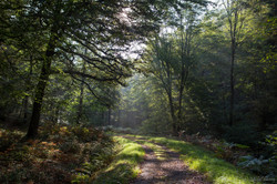 foret ardennes