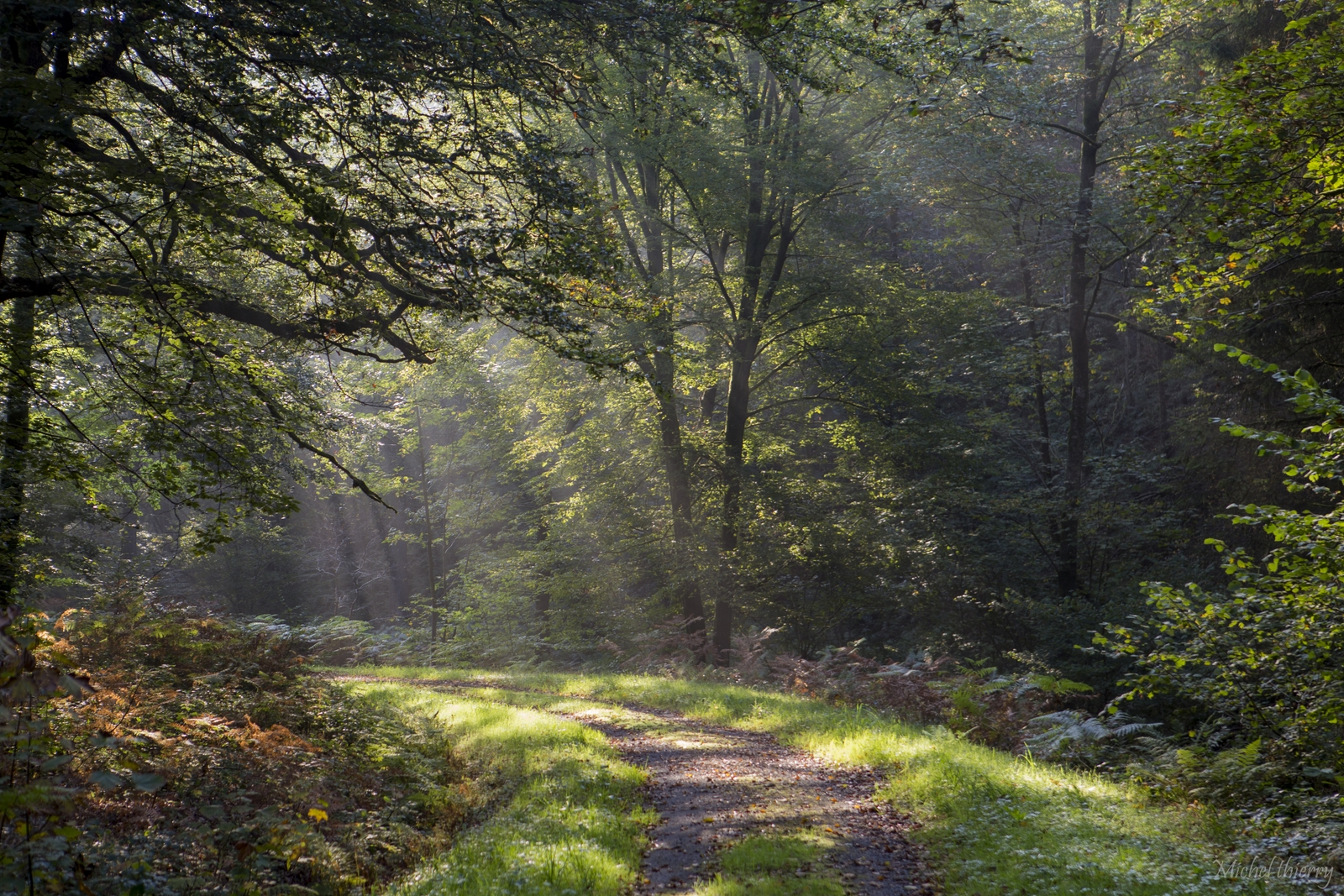 foret ardennes (1)