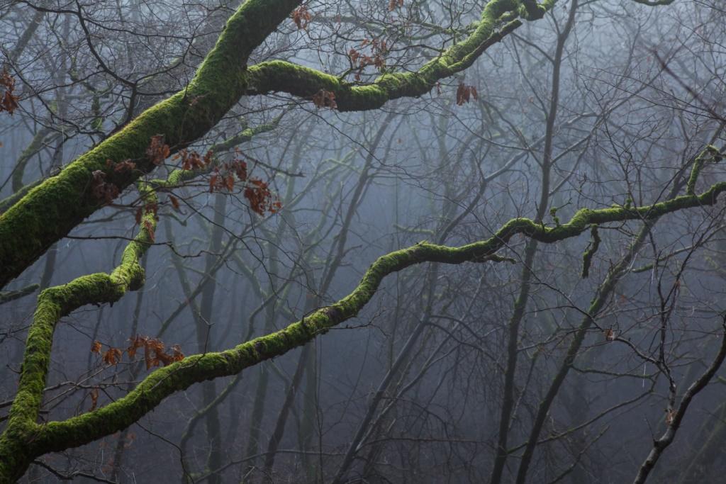 Mystique forêt ardennaise