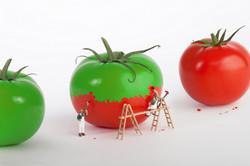 tomato paint