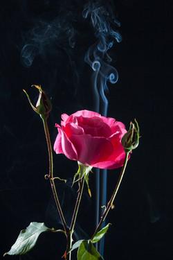 Fumée de Rose