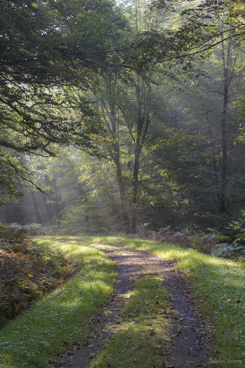 foret ardennes (2)