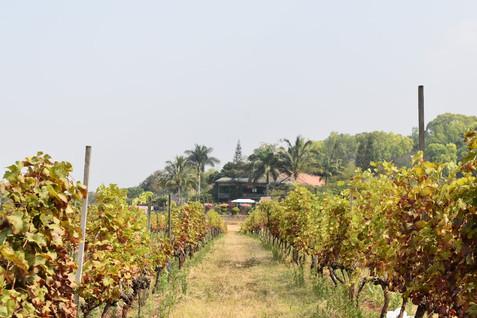 BIRMANIE   Domaine viticoled'Aythaya: Rencontre et découverte