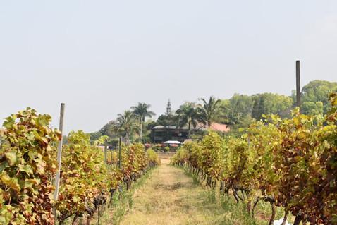 BIRMANIE | Domaine viticoled'Aythaya: Rencontre et découverte