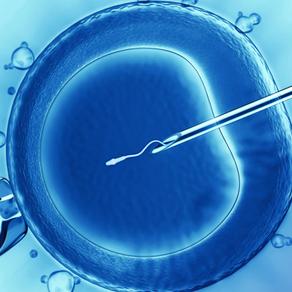 Injeção Intracitoplasmática de Espermatozóide