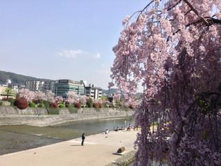 春のうららを待ちながら。午後の空に飛ばす夢。