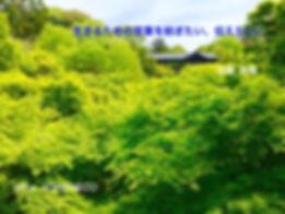 HPバナー用/初夏.jpg