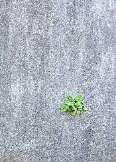 green%20leaves%20on%20gray%20concrete%20floor_edited.jpg
