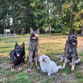 Die vier Spezialisten im Einsatz