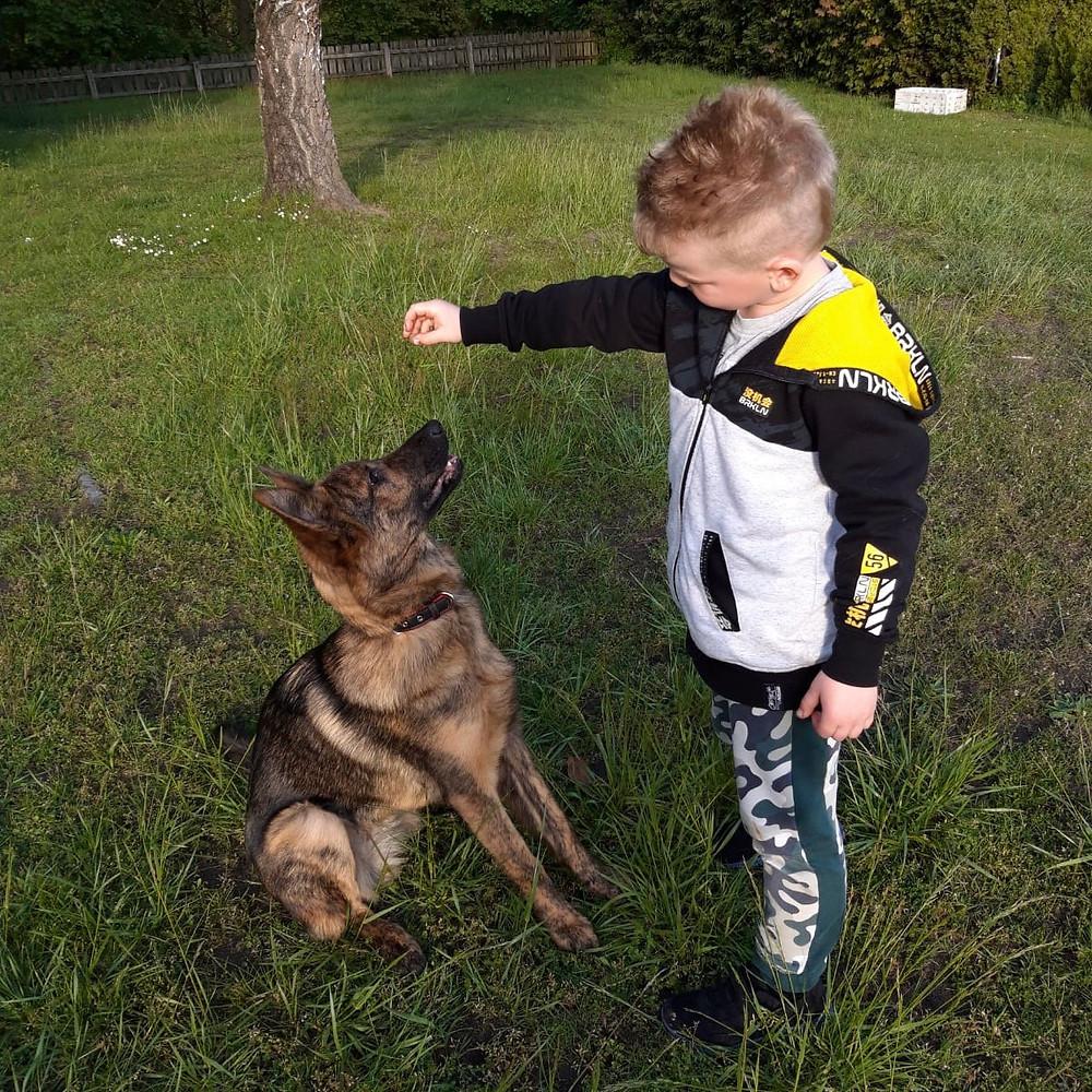 Junge beim Hundetraining mit Schöferhündin