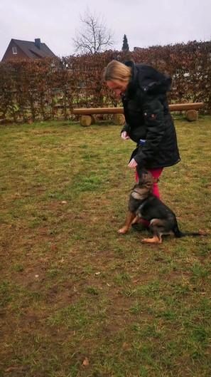 Junghund-Training mit Schäferhündin Anka und Veronika Hauff