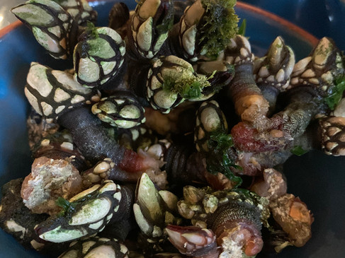 Portuguese delicacy: percebes (barnacles