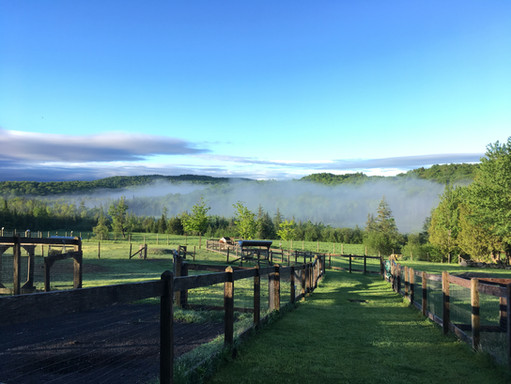 Alpagas Sutton - Morning Pasture