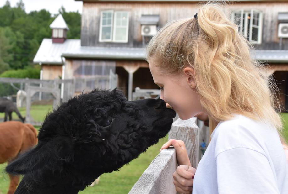 Alpagas Sutton - Alpaca kiss