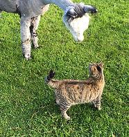 Grey Alpaca & Tabby Cat