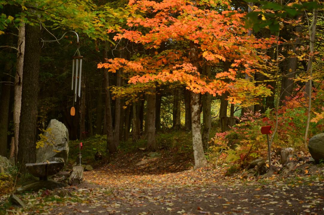 Alpagas Sutton - Nature Trails - Fall