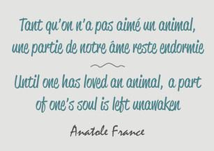 Citation / Quote Anatole France