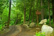 Bridge to forest.jpg