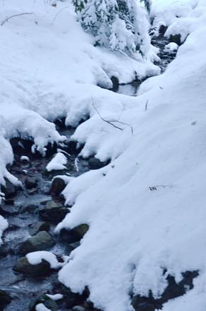 Alpagas Sutton - Trail Creek