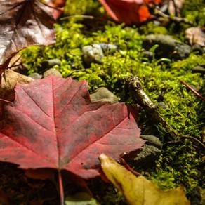 Horaire d'automne en vigueur