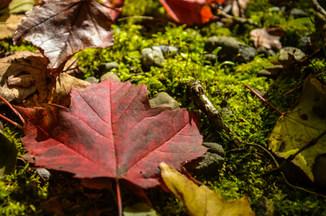 Sentiers à l'automne / Fall Trails Colors