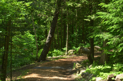 La forêt.JPG