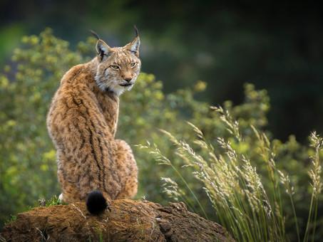 Parques Nacionales, quince joyas a tu alcance