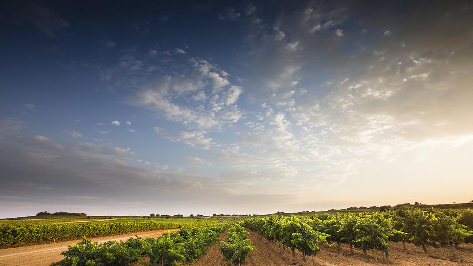 La Ruta del Vino Ribera del Duero continúa creciendo y registra 24 nuevas peticiones de adhesión