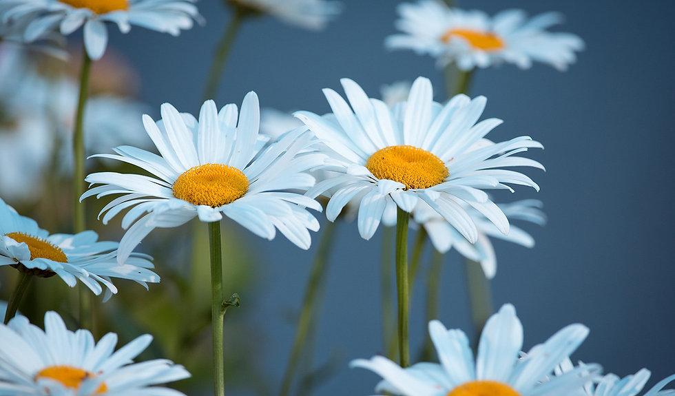 thum_pattern_motive-flower1.jpg