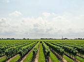 brookfield agroindustry