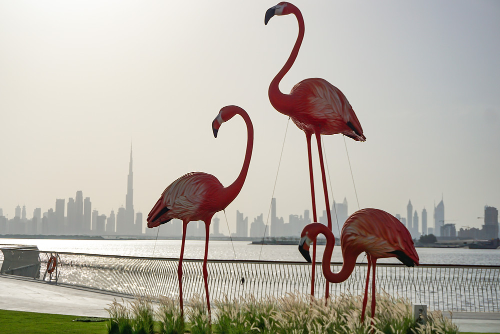 Flamingos at the Dubai Creek Harbour