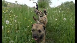 Border Terrier Club Schweiz - Der Film