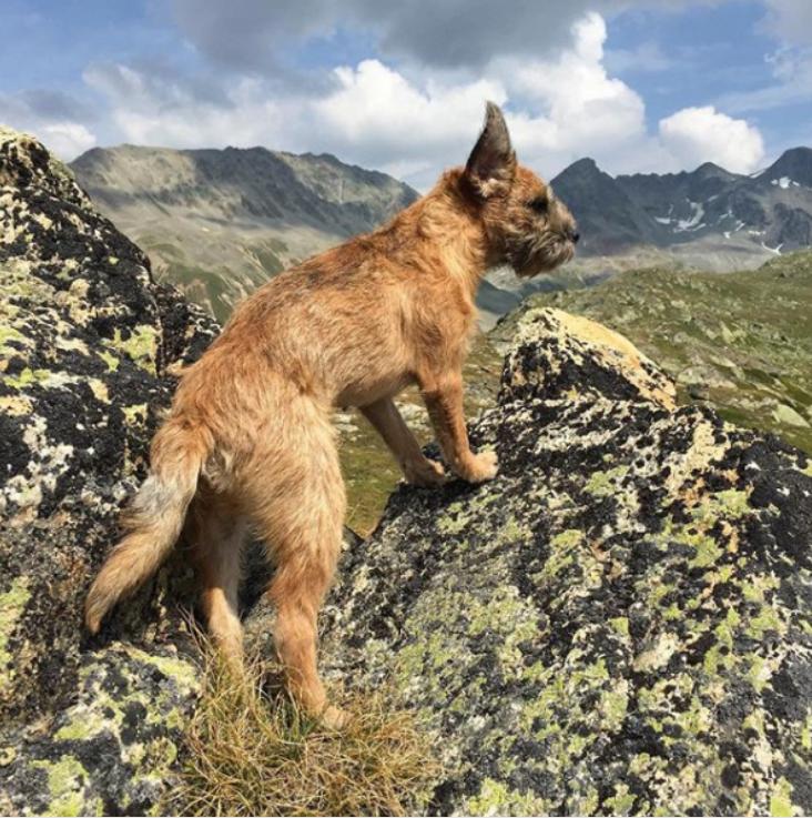 Border Terrier Graubünden Wandern Wanderlust Muottas Muragl