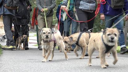 Border Terrier Wanderplausch 2018