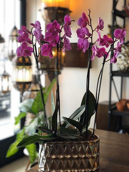 Orquídea doble