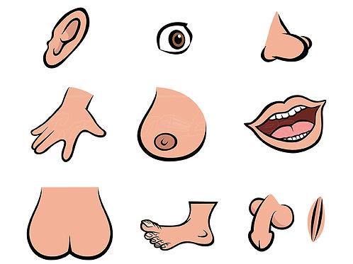 anatomy parts