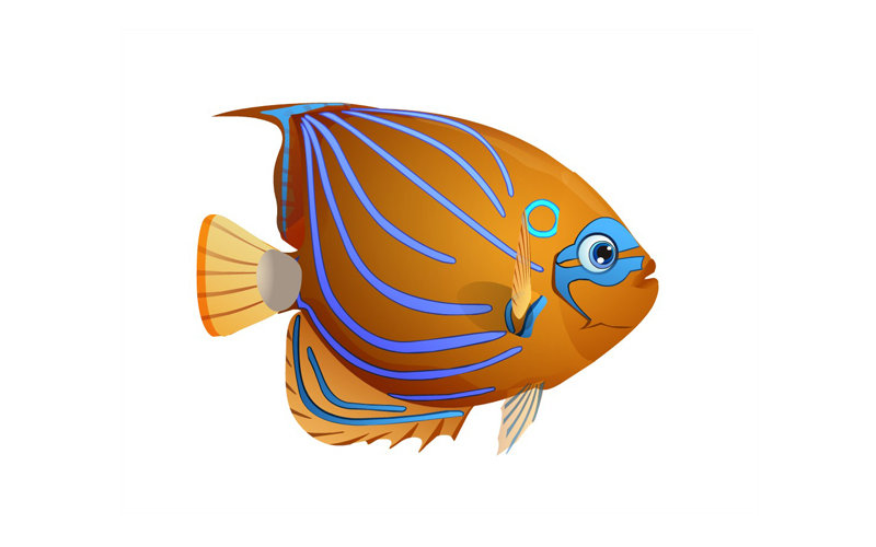 vector illustrtion of fish for animation company
