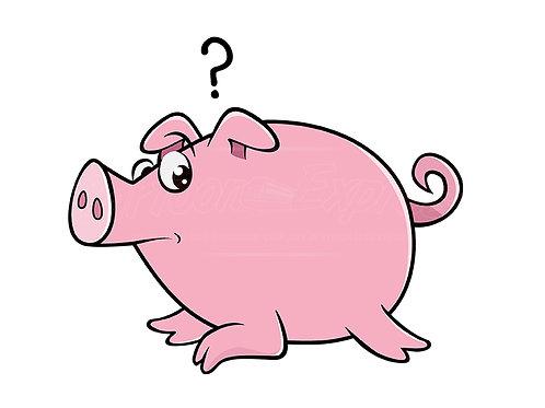 pig wondering