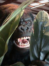 Roaring Gorilla