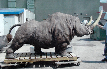 Jungle Cruise Rhino