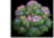bush_c_2 (1).png