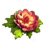 tenderness bloom.png