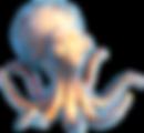 sleeping_octopus.png
