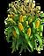 t_tgd18_corn.png